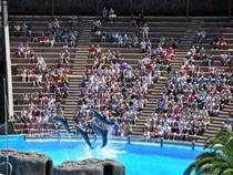 Exhibición de delfines: