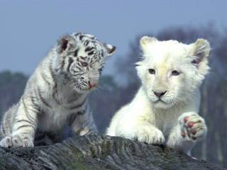 Zoo Safaripark © Zoo Safaripark