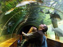 Aquarium of the Lakes © Aquarium of the Lakes